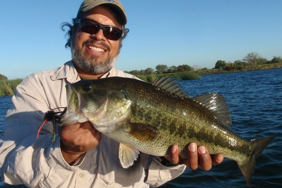 A delta largemouth caught on a fly
