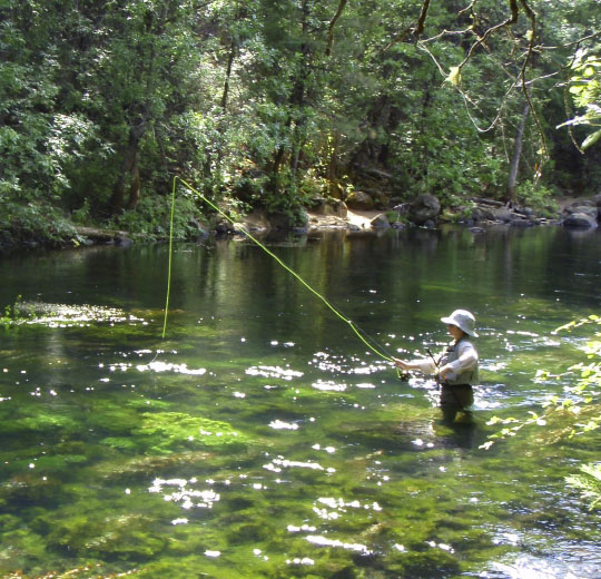 Burney Creek is crystal clear, highly scenic and a great place to learn how to fly fish.