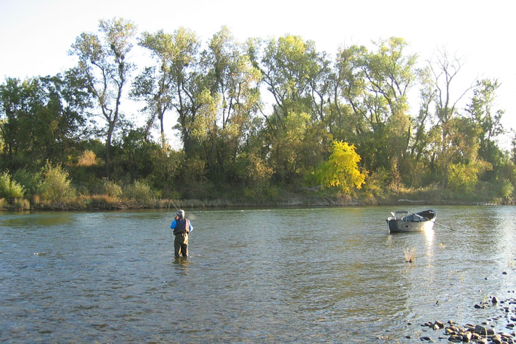 Wade fishing can be very productive on the Feather River
